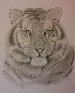 Carmelo's Tiger